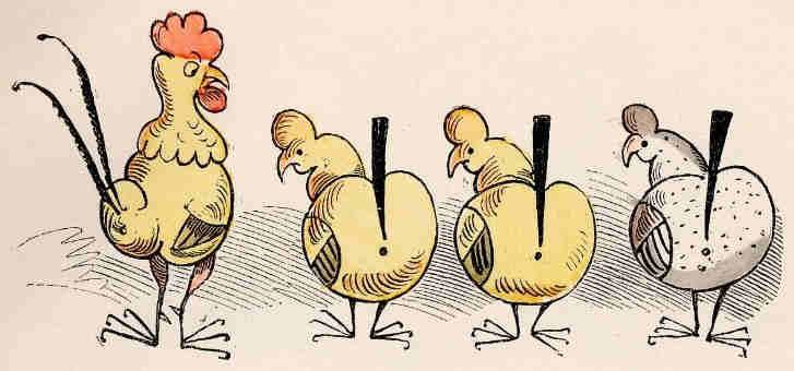 Tres gallinas y un gallo.